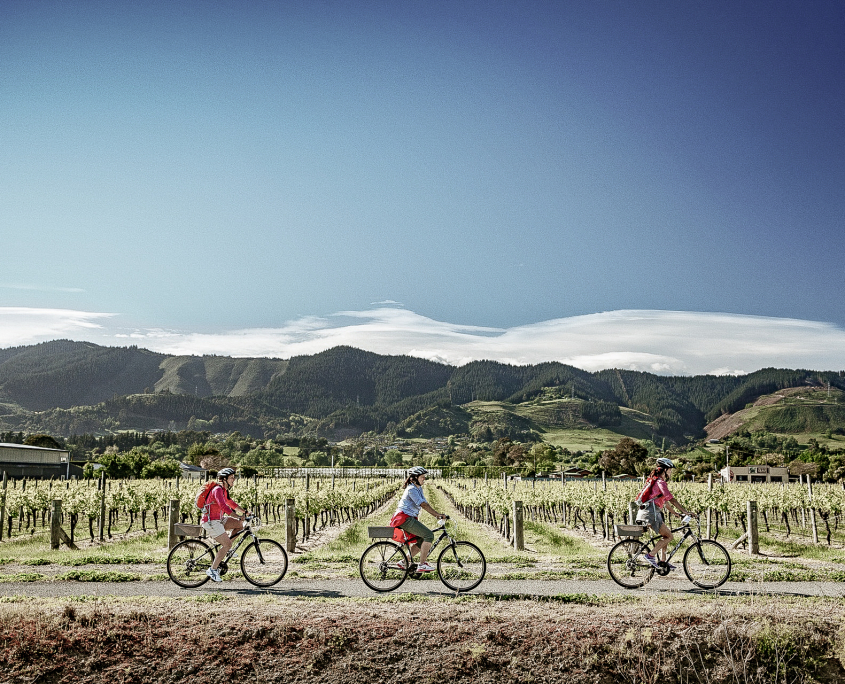 Three cyclists cycling past sunny vineyard in upper south island.